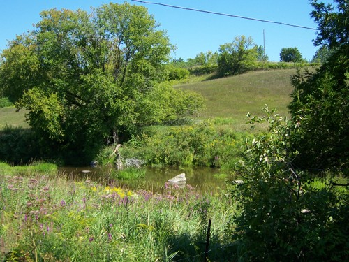 View of the Creek and Meadow