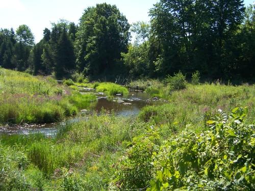 The creek running through the farm