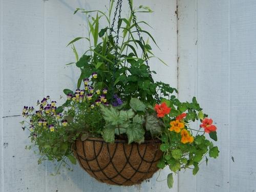 flower basket by the back door